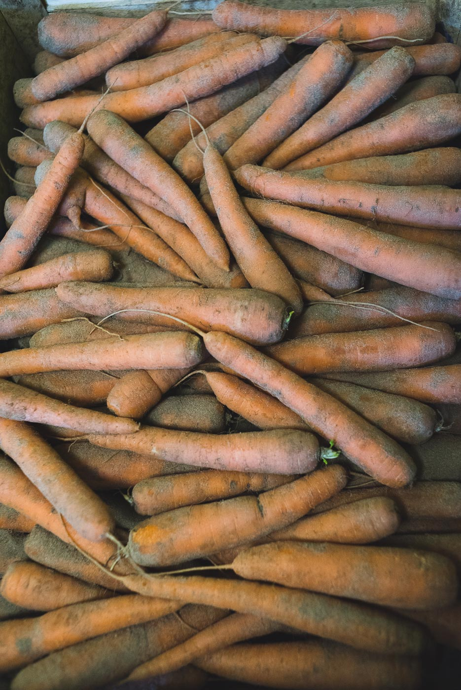 carottes de terre, carottes de sable, Sébastien Le Jolivet, magasin de ferme, vente directe, Légumes des Gastines, saint-père, saveurs de Saint Malo, producteur, pommes, citrouilles, kabocha, maraichage, petit producteur, local
