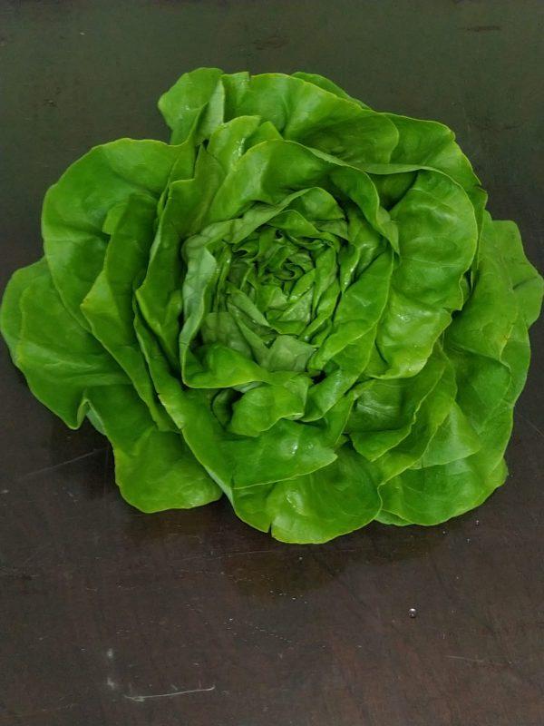 laitue-legumes-des-gatines