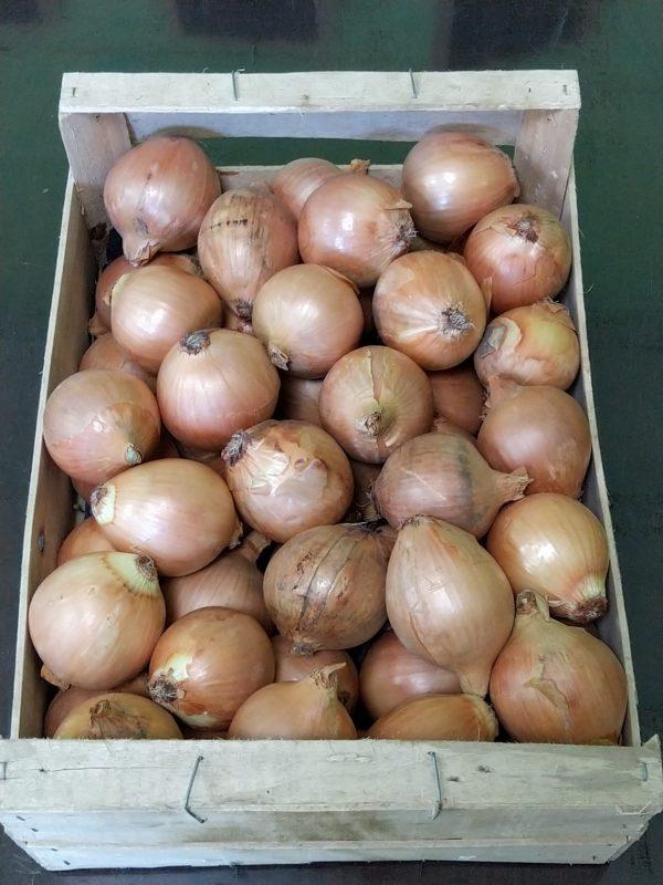 oignons-jaunes-legumes-des-gatines