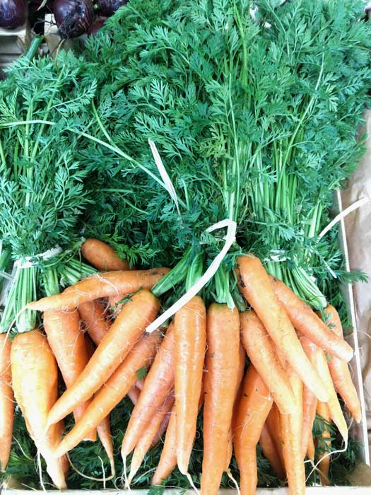carottes-botte-legumes-des-gatines