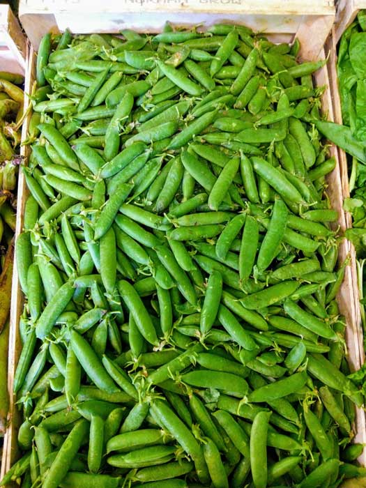 petits-pois-legumes-des-gatines
